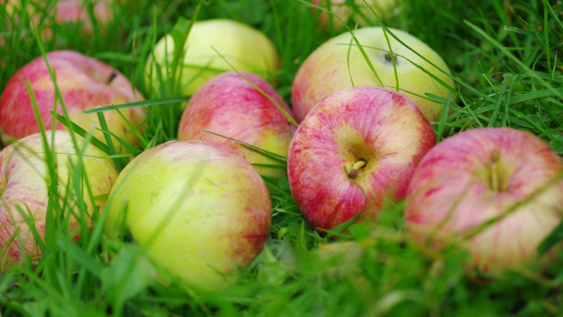 Яблочные семечки – источник йода