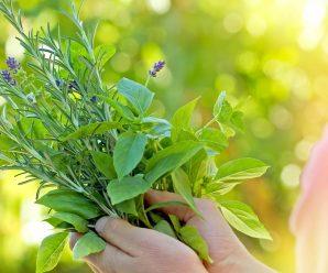 Как с помощью трав улучшить собственную жизнь?