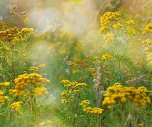 Растения, которые помогут избавиться от паразитов.